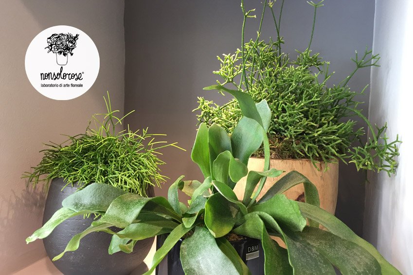 Cura del verde 3 suggerimenti per creare la tua oasi for Suggerimenti per la casa